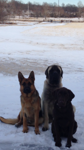3 wise dogs