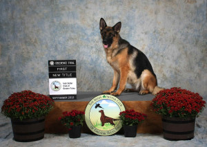 9-22-12 Honey BN Title at Irish club show
