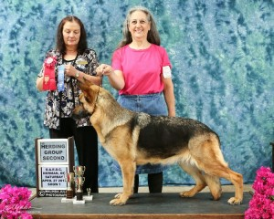 Cinder 4-27-13 Group 2 placement UKC