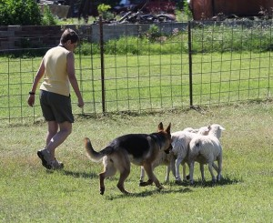 May herding June 13 (2)