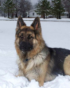 Eldorado-Bruno-snow-picture
