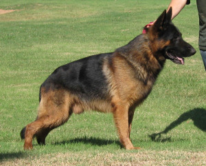 Creed sire of 2011 litter #2