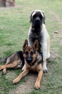 Kiowa-Buck with his friend