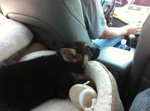 Levi riding to new home