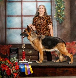 Cinder- Reserve Best in Show UKC Nov. 2014