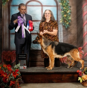 Honey Group 2 UKC Nov. 2014
