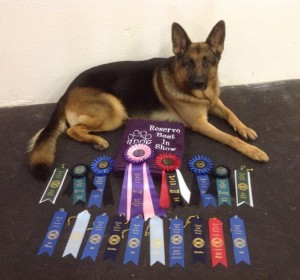 Rowdy-Marshall texas UKC Reserve best in show