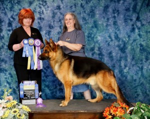 Tank UKC Best In Breed 4-2014