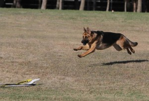 May Coursing #3