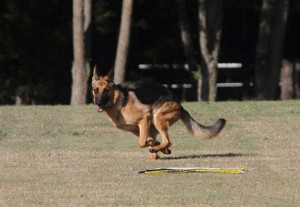 May Coursing #4