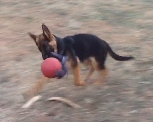 Freki 11-20-14 with ball