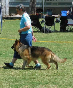 daisy-competing-may2005